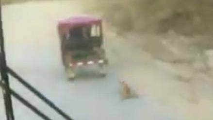 Sujeto amarró y arrastró a un perro de un mototaxi en Olmos