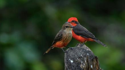 Los bosques secos del Marañón ahora son un área de conservación regional
