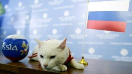 Rusia vs. Egipto: El gato Aquiles predice triunfo del anfitrión