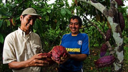 San Martín: el cacao que salvó a un pueblo y a un área protegida del narcotráfico