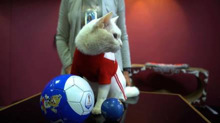 Aquiles, el gato oráculo de Rusia 2018, predice una victoria Nigeria sobre Argentina