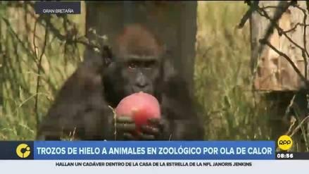 Helados de fruta para animales de zoológico de Londres por ola de calor