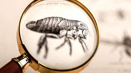 Medicamento antipulgas podría prevenir zika y malaria, según estudio preliminar
