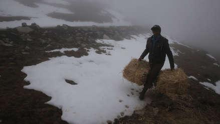 Cáritas del Perú: Familias afectadas por las bajas temperaturas están viviendo una situación de crisis