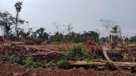 Un juzgado ambiental en Ucayali para frenar la destrucción de bosques