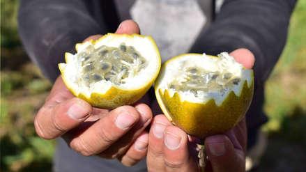 Agricultores de granadillas de Otuzco apuestan por la exportación