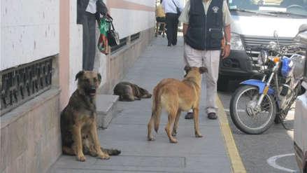 Incrementa el número de mascotas en familias de Arequipa