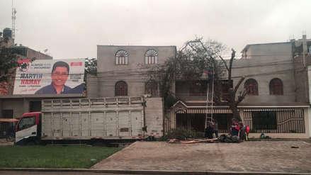 Ediles cortan árbol para dejar ver cartel de candidato de APP