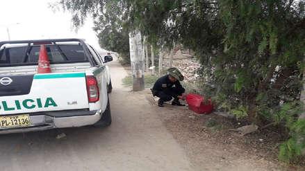 Chiclayo: Policía ecológica recupera monito abandonado en la calle