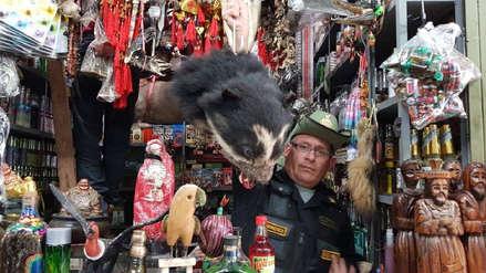 Tráfico de fauna: más de mil animales y partes disecadas fueron incautados en el Perú