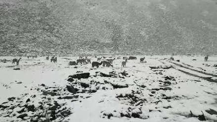Fuertes nevadas afectan sembríos y servicio eléctrico en zonas altas de región Puno