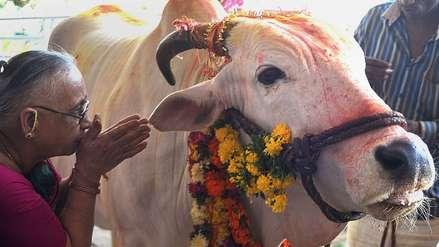 Un hombre fue linchado por pasturar vacas en la India