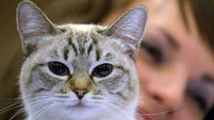Una menor de edad mató a un gato con un hacha y lo grabó: miles de rusos piden que la castiguen