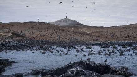 Islas Lobos de Afuera: biodiversidad que busca ser protegida de la pesca informal
