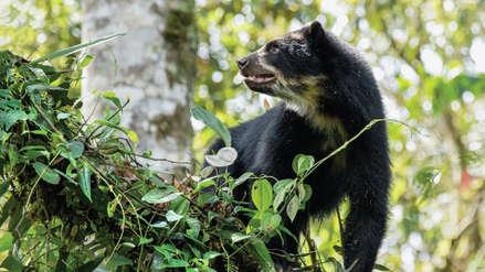 Ecuador: Unesco declaró la zona de Chocó Andino como reserva de la biosfera