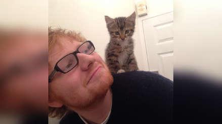 Ed Sheeran creó un perfil de Instagram a sus dos gatos [FOTOS]