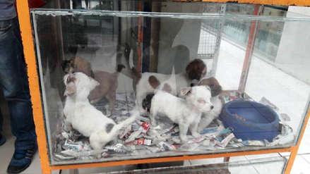 Fiscalía rescató cinco cachorritos maltratados de tienda de mascotas