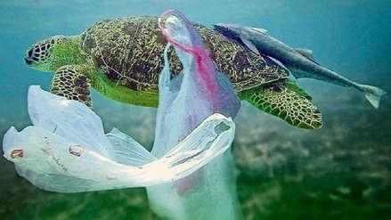 Chile, el primer país americano en prohibir totalmente el uso de bolsas de plástico