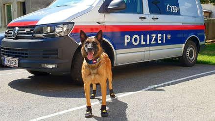 Perros policías usan botas especiales en Austria por calor extremo en Europa
