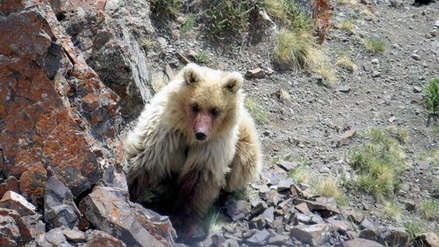 Rusia | Animal que se creía extinto fue visto por primera vez en décadas