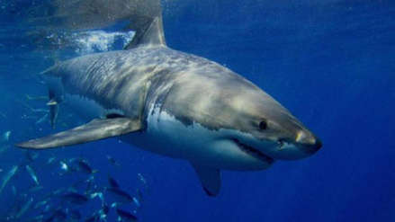 Científicos descifran misterio de tiburones que aparecieron sin hígado en playas de África