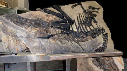 Italia recuperó a Bruno, su dinosaurio más grande y completo de Europa