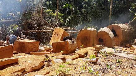 Concesión turística Ese'eja es acechada por taladores ilegales en Madre de Dios