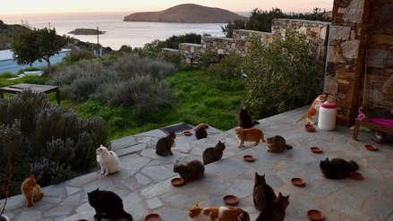 Una ONG ofrece trabajo con sueldo fijo para cuidar gatos en una isla de Grecia