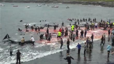 La tradición de masacrar más de cien de ballenas cada año en las Islas Feroe