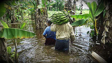 Amplían beneficios a tres mil agricultores afectados por El Niño costero