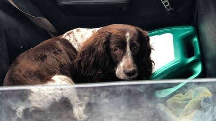 Bellavista: Municipalidad ubicó a dueño de carro donde se encerró a perros