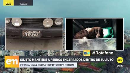Dos perros están encerrados dentro de un automóvil desde hace dos semanas en el Callao