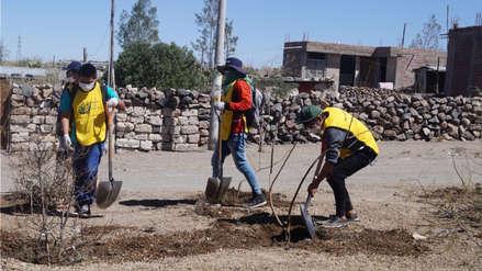 Sentenciados y personas que cumplieron condena sembraron mil árboles