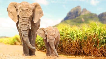 ¿Por qué los elefantes casi no desarrollan cáncer y eso cómo nos puede beneficiar?