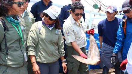 """Galápagos: """"Los vientres de tiburones hembra fueron cortados y los bebés puestos en sacos aparte"""""""