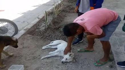 Chiclayo: conductor de patrullero atropelló a perrito y lo dejó abandonado