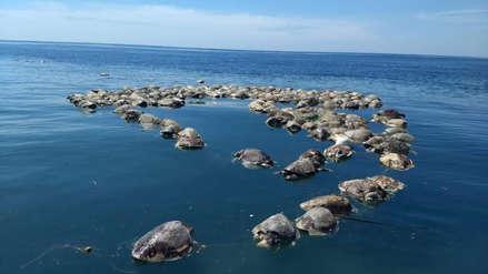 Unas 300 tortugas marinas en peligro de extinción fueron halladas muertas en México
