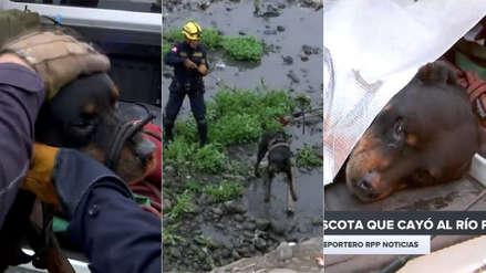 Video   Serenos rescataron a un perro que había caído al río Rímac