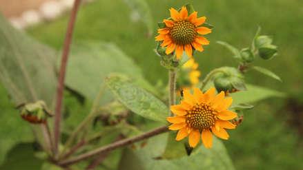 Diez plantas medicinales que puedes cultivar en casa para tener tu propio botiquín natural