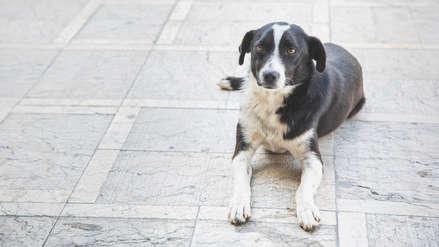 Un perro callejero cuidó toda una noche a un anciano con alzheimer que se había perdido