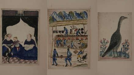 MALI exhibe acuarelas originales de Baltasar Martínez Compañón