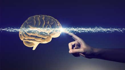 Científicos descubren una neurona que sería exclusiva de los seres humanos