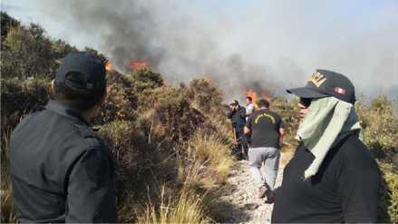Video | Incendio forestal amenaza bosque de Queñual en Arequipa