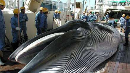 Japón cazó más de 50 ballenas en área protegida de la Antártida