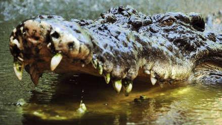 Un cocodrilo devoró a una mujer y a su bebé en un lago