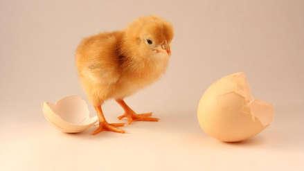 Día del Huevo: ¿Qué fue primero, el huevo o la gallina? Esta es la respuesta de la física cuántica