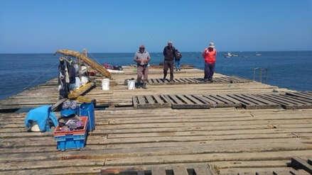 Pescadores ofrecen su mano de obra gratis para refacción de muelle de Eten