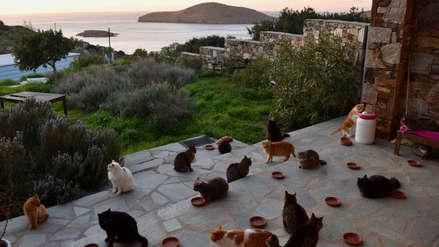El mejor trabajo del mundo para los amantes de gatos se encuentra en una isla griega