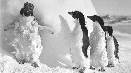 Un centenar de pingüinos momificados fueron encontrados en la Antártida