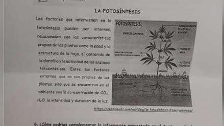 Utilizan imagen de marihuana como ejemplo de fotosíntesis en prueba a escolares en Cusco